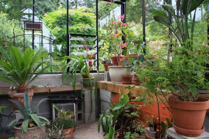 Sodo sur la terrasse en plein soleil - 3 1