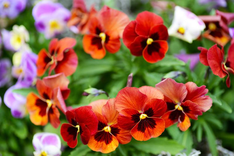 Sprzedaż kwiatów z ręki może być objęta wyższą stawką opłaty targowej./ fot.Fotolia